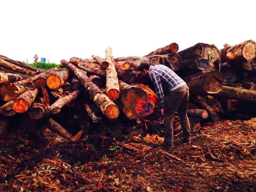 houtmeester-keurmeester-boomstammen-bomofiel