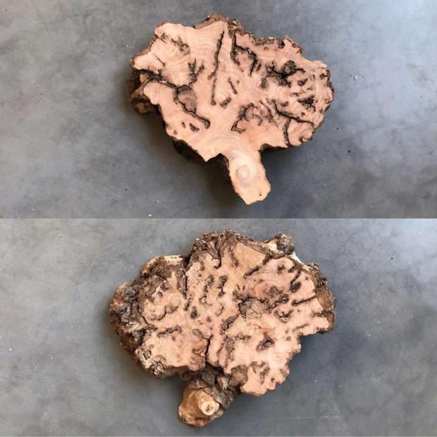 rariteit-iepenhout-hersens