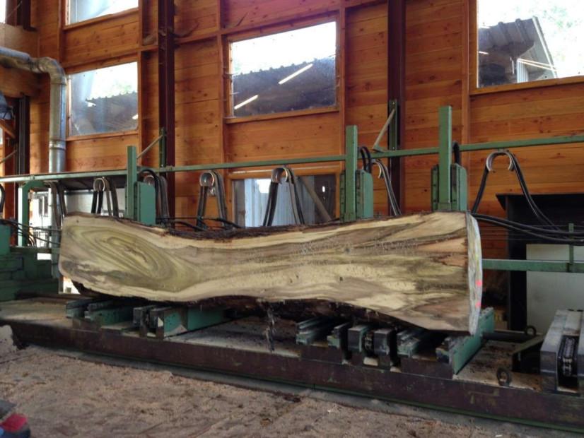tulpenboom-boomzaag-woodend